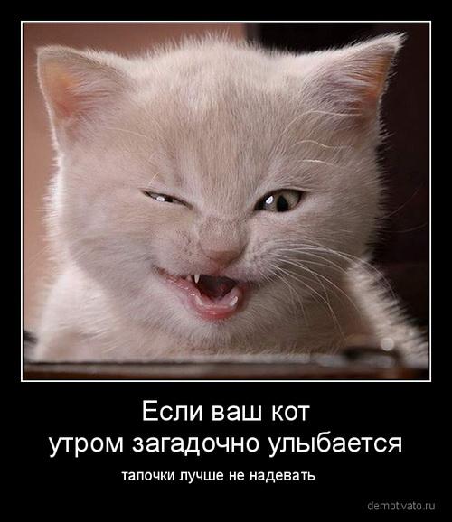 очень смешные картинки и котов про собак