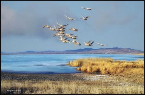 Птицы и погода. Народные приметы